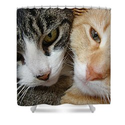 Shower Curtain featuring the digital art Cat Faces by Jana Russon