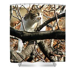 Cat Hunting Bird Shower Curtain