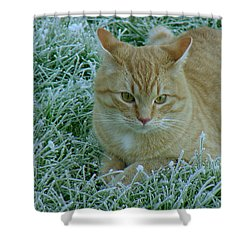 Cat In Frosty Grass Shower Curtain