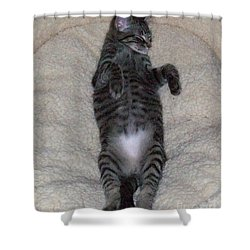 Cat In Repose Shower Curtain