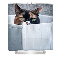 Shower Curtain featuring the photograph Cat In The Box by Laura Melis