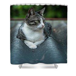 Cat In The Cradle Shower Curtain