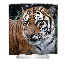 Shower Curtain featuring the photograph Cat In The Jungle by Charuhas Images