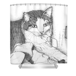 Domestic Cat Shower Curtain