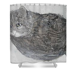 Cat Named Shrimp Shower Curtain by AJ Brown