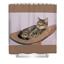Cat-nap Shower Curtain