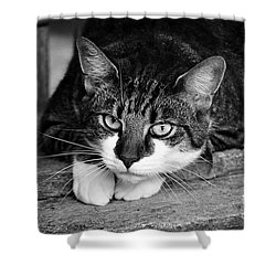 Cat Naps 2 Shower Curtain