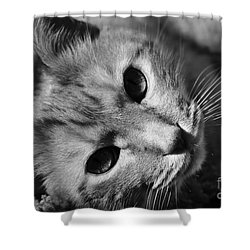 Cat Naps Shower Curtain