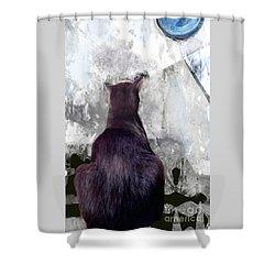 Cat's Blue Moon Shower Curtain