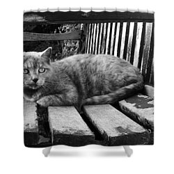 Cat On A Seat Shower Curtain
