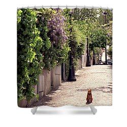 Cat On Cobblestone Shower Curtain