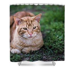 Shower Curtain featuring the photograph Cat On Genoves Park Cadiz Spain by Pablo Avanzini