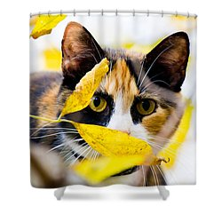 Cat On The Prowl Shower Curtain by Jonny D