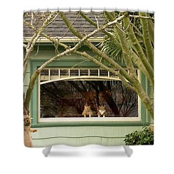 Cat Pals Waiting Shower Curtain