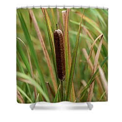 Shower Curtain featuring the photograph Cat Tail by Paul Freidlund