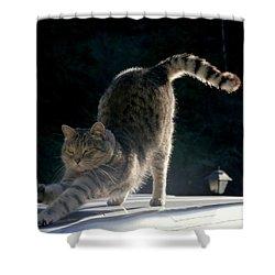 Cat Yoga Shower Curtain