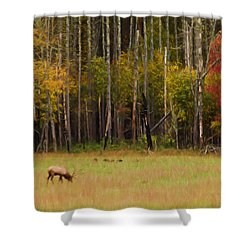 Cataloochee Valley Elk Shower Curtain