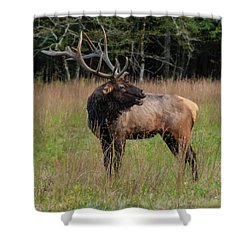 Shower Curtain featuring the digital art Cataloochee Valley Elk  by Chris Flees