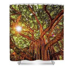 Catch A Sunbeam Under The Banyan Tree Shower Curtain