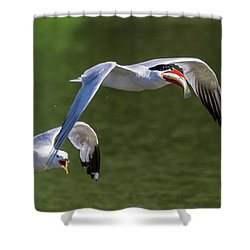 Catch Of The Day - 2 Shower Curtain