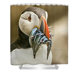 Catch Of The Day Shower Curtain by Brian Tarr