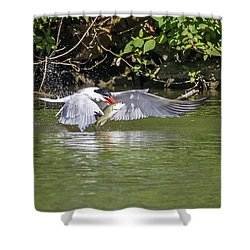 Catch Of The Day - 1 Shower Curtain