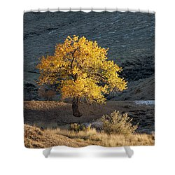 Catching Last Rays Shower Curtain