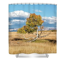 Catching Some Rays Shower Curtain