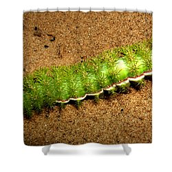 Shower Curtain featuring the photograph Caterpillar 009 - Macro by George Bostian