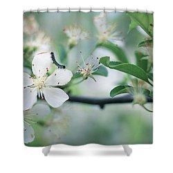 Caterpillar On A Tree Blossom Shower Curtain