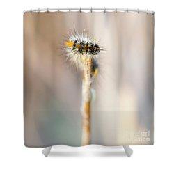 Caterpillar On The Stick Shower Curtain by Gurgen Bakhshetsyan