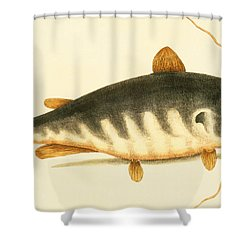 Catfish Shower Curtain by Mark Catesby