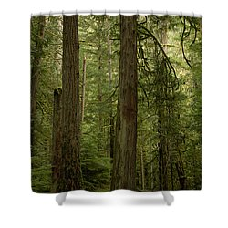 Cathedral Grove Shower Curtain