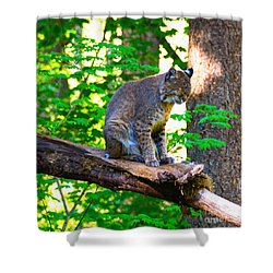 Catnap Shower Curtain