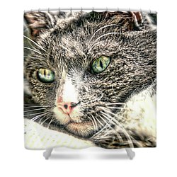 Cats Eyes Shower Curtain by Dennis Baswell
