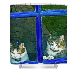 Cats On Baylor Street Shower Curtain