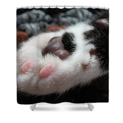 Shower Curtain featuring the photograph Cats Paw by Kim Henderson