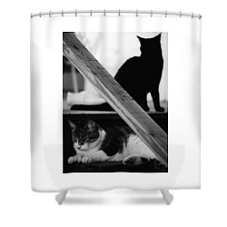 Cats Pose For Money And Fame Shower Curtain