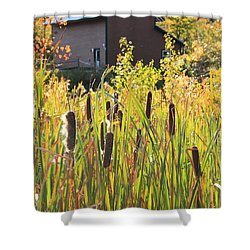 Cattails And Barn Shower Curtain