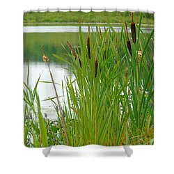 Cattails And Still Water Shower Curtain