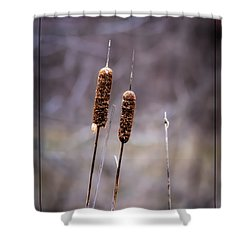 Cattails Shower Curtain by Brenda Bostic