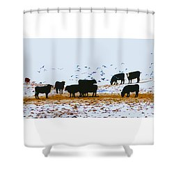 Cattle And Birds Shower Curtain