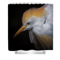 Cattle Egret Closeup Portrait Shower Curtain by David Gn