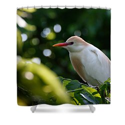 Cattle Egret In Oklahoma Shower Curtain