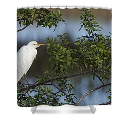 Cattle Egret In The Morning Light Shower Curtain