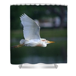 Cattle Egret Profile Portrait In Flight Shower Curtain