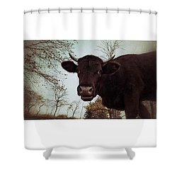 #cattle #kuh #rind #weide #herbst Shower Curtain