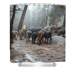Cattle Moving Shower Curtain