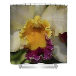 Cattleya  Shower Curtain