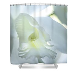 Cattleya Orchid #1 Shower Curtain